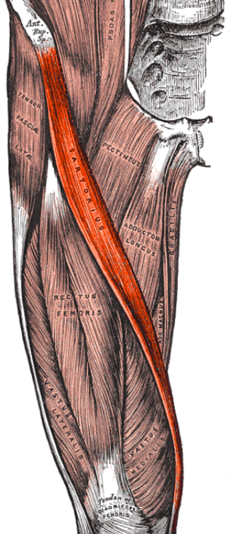 Issues Around the Hip: From Tendonitis to Bursitis - Beacon
