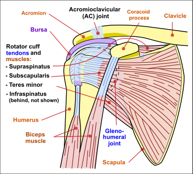 The Most Common Shoulder Injuries And How Theyre Treated Beacon